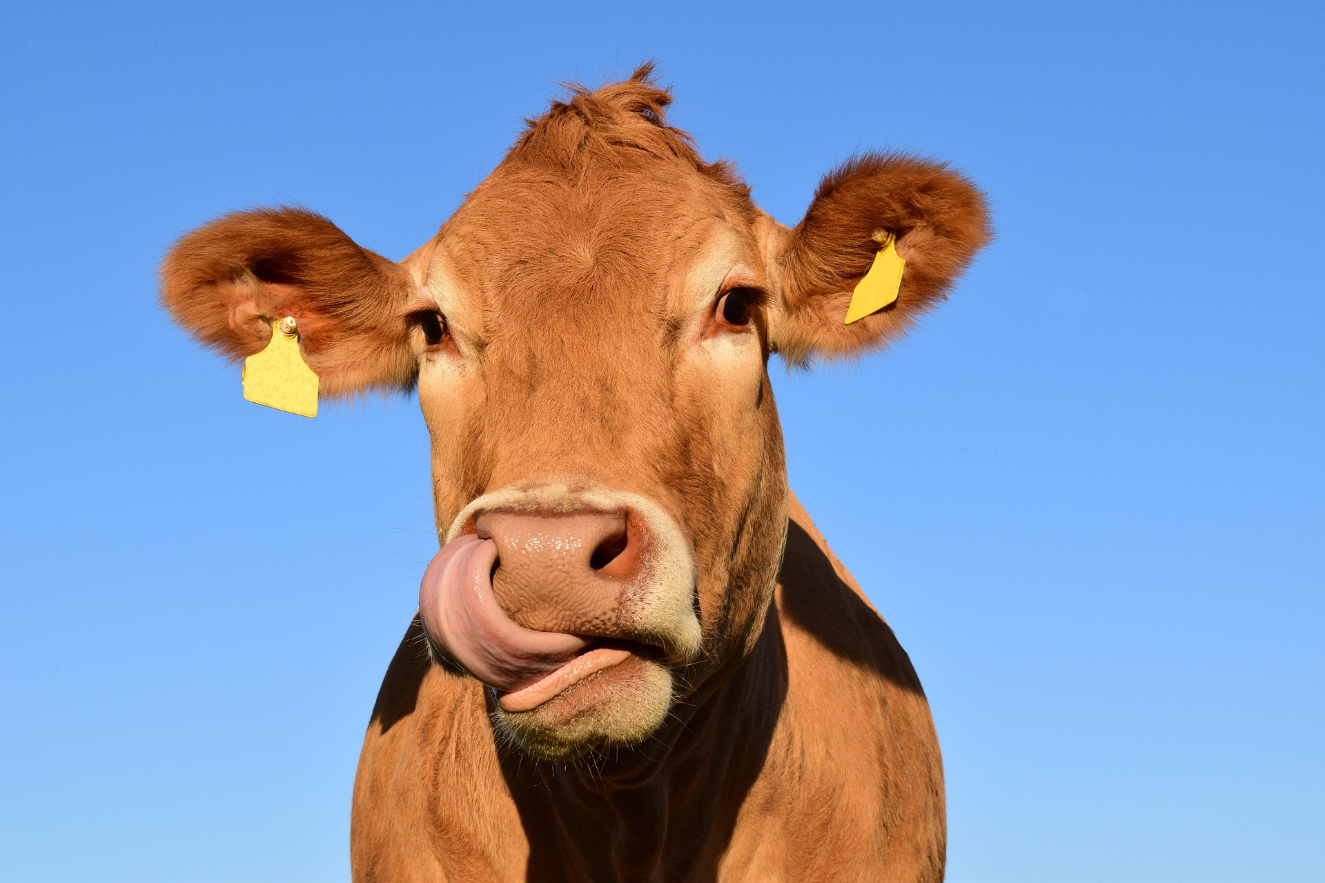 Crypto mining equipment uses cow poo for electricity, is this the answer?